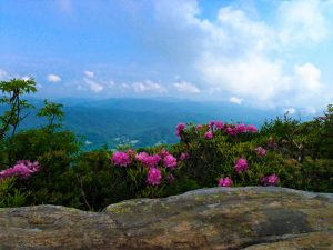 Read more about the article Roan Mountain, TN