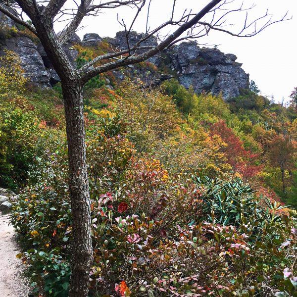 Shortoff Mountain Trail